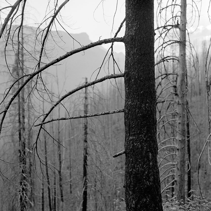 Photo 21 – Forest After Fire