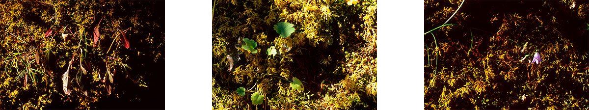 Photo 17 (Trio) – Wild Plants