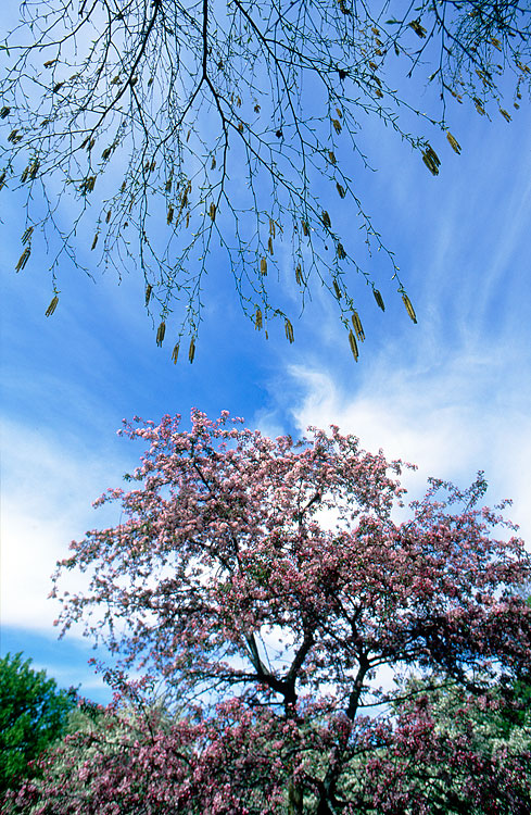 Spring, 2011