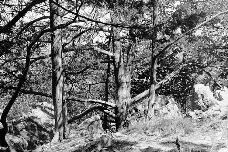 West Bluff Trail