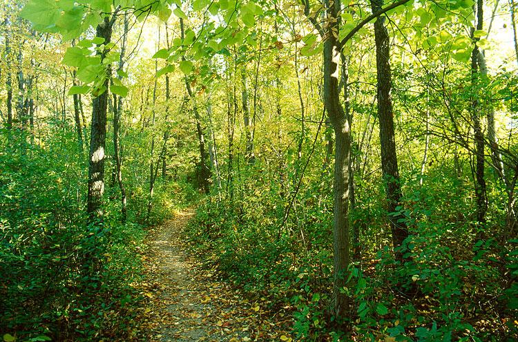 A path by the Stricker's Pond, 2011