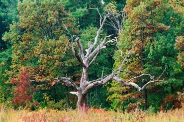 A bare tree