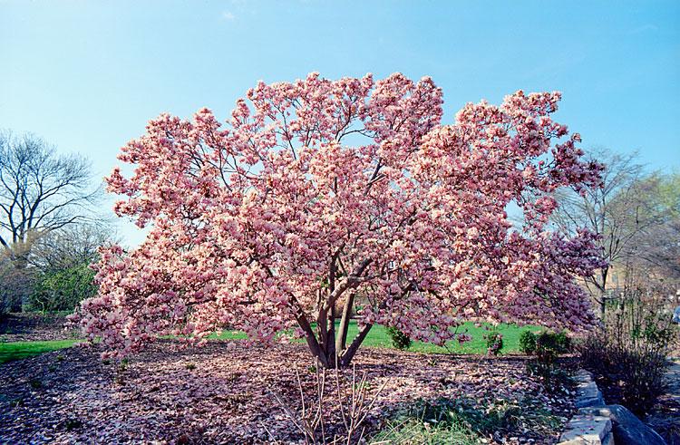 Magnolia, 2012