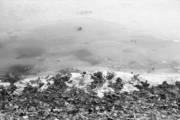 Stricker's Pond