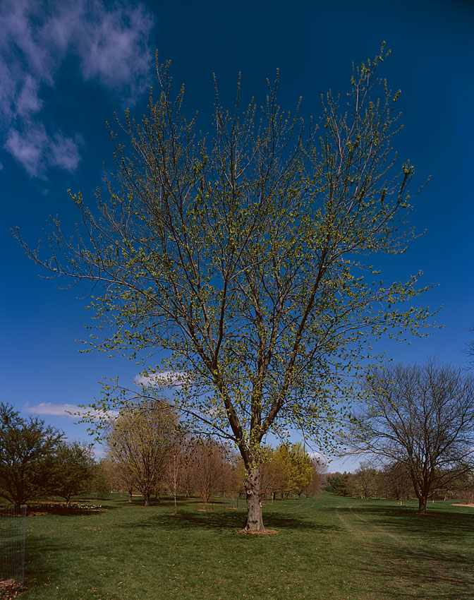 UW-Madison Arboretum