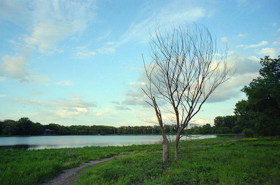 Tiedeman Pond