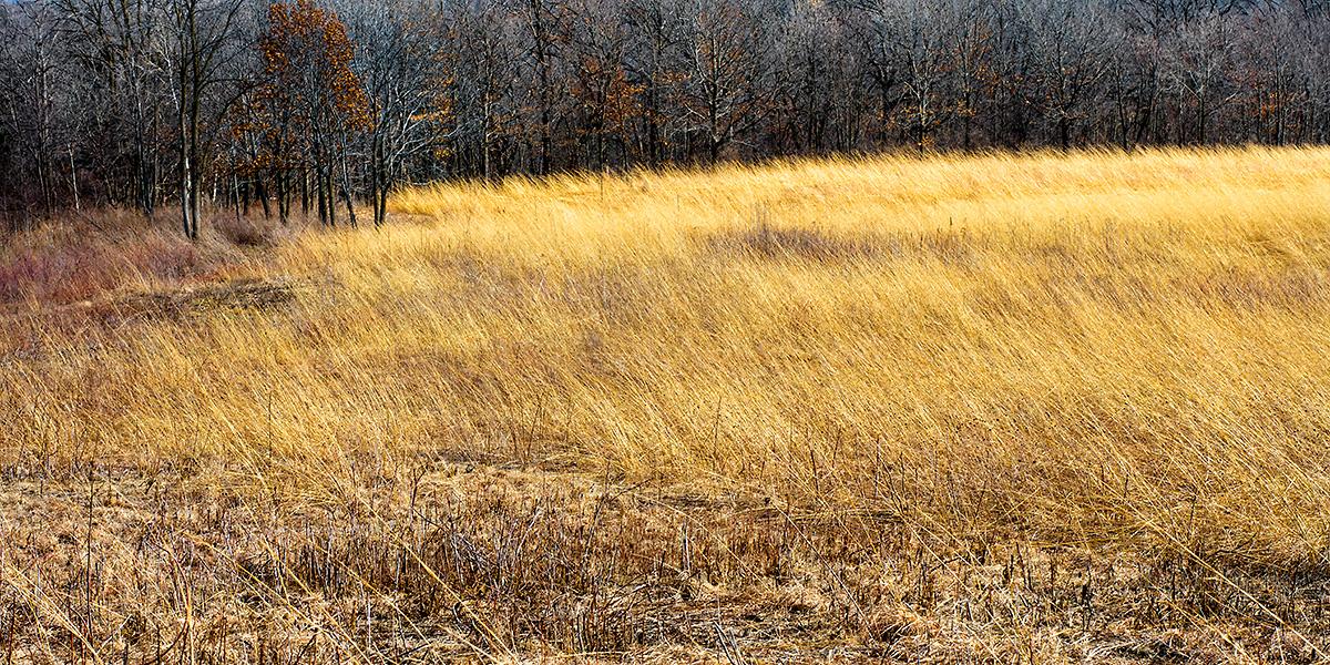 Prairie, Owen Park © Ting-Li Lin